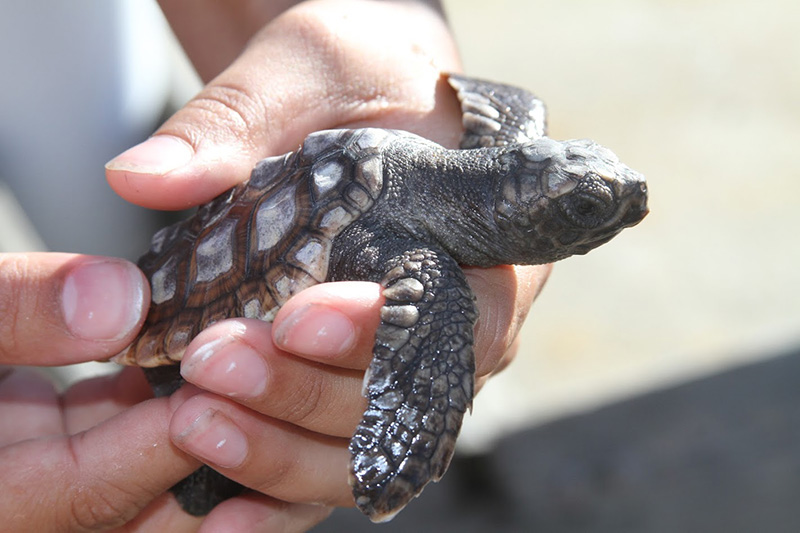 Research-Shows-Sea-Turtles-Navigate-Using-Magnetic-Fields